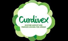 Curdivex